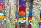 Disfruta más por menos Bosque de Oma maravillas naturales