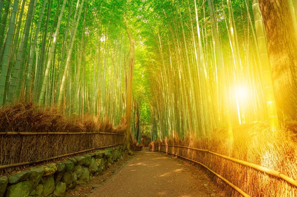 Disfruta más por menos te invita a conocer una maravilla natural como es el bosque de Sagano Arashiyam