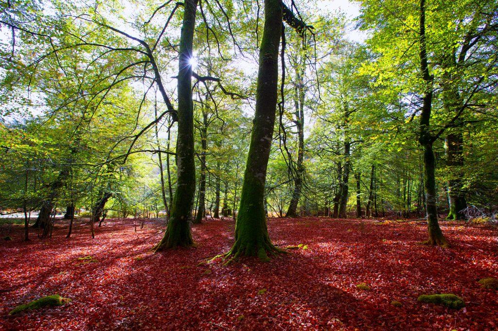 Disfruta más por menos tesoros naturaleza otoño Selva de Irati