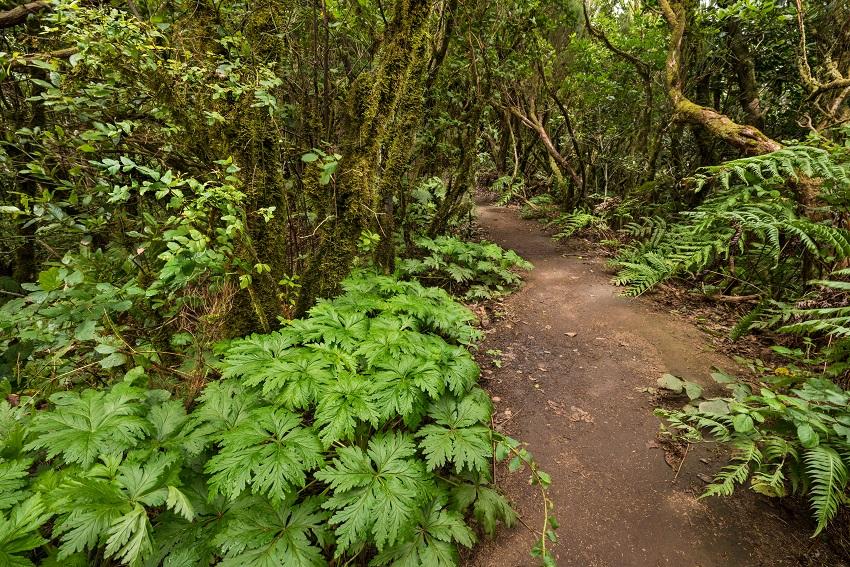 Disfruta más por menos sendero bosque encantado Pijaral Tenerife Canarias