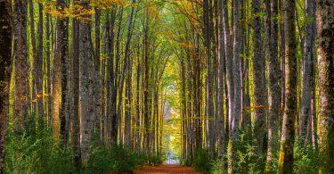 Disfruta más por menos lugares mágicos otoño turismo viajar