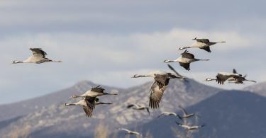 Disfruta más por menos turismo naturaleza otoño laguna gallocanta
