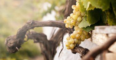 Disfruta más por menos enoturismo viajes restaurantes bodegas vino viñedos viajar